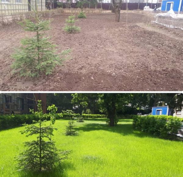 Посев газона. Гидропосев. Рулонный газон 2