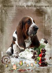 Исключительно прекрасный щенок бассета